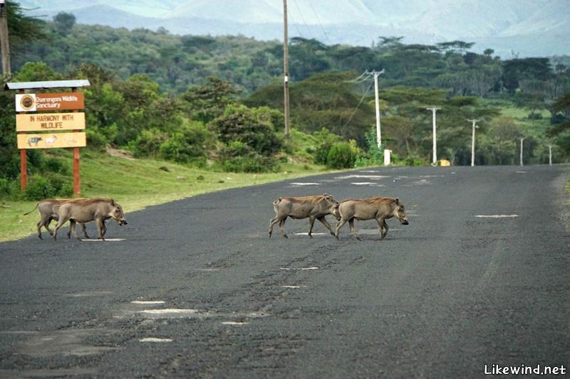 여행 467일차(2), 자전거로 누비는 야생의 땅 – 케냐, 나이바샤